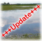 News-Hochwasser Update